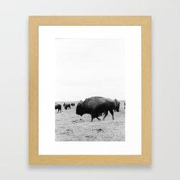 Buffalo Hustle Framed Art Print