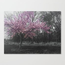 Sundays are for flowers Canvas Print