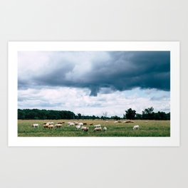 Cloud Cows Art Print