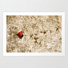 italien butterfly Art Print