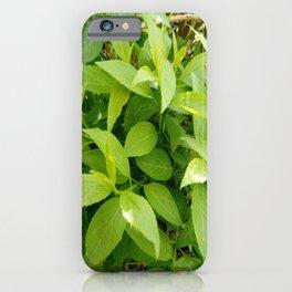 Greenery and leaf VII iPhone Case
