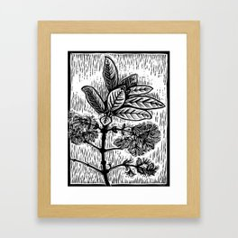 Pygmy Fringe Tree Framed Art Print