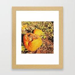 rotten pumpkins Framed Art Print