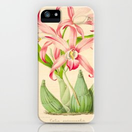 LAELIA AUTUMNALIS Vintage Botanical Floral Flower Plant Scientific Illustration iPhone Case