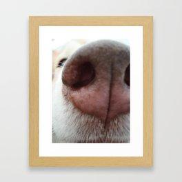 Sniff-Sniff Framed Art Print