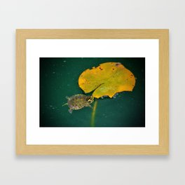 Baby Turtle And Lily Pad Framed Art Print