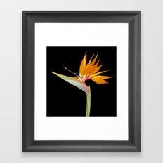 Birds of Paradise Flower Framed Art Print