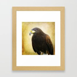 A Harris Hawk Framed Art Print