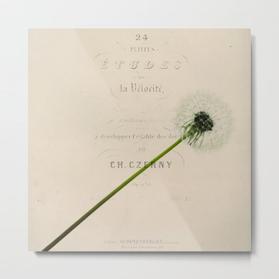 a dandelion Metal Print