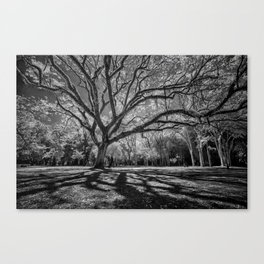 Big Tree Branches Canvas Print