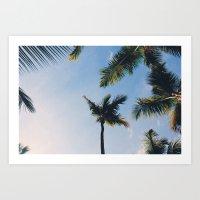 Dominican Palm Trees Art Print