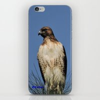 snatch iPhone & iPod Skins featuring Red-Tailed Hawk on Watch at Foothill and B Street by Ralph S. Carlson