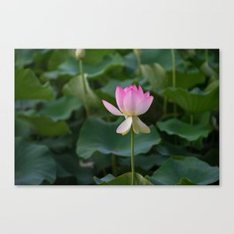 water lily #society6 #decor #buyart Canvas Print