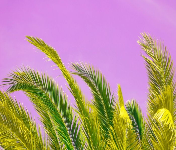 Green palm leaves on a pink background - #Society6 #Buyart Metal Travel Mug