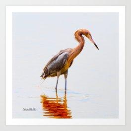 Reddish Egret 4 Art Print