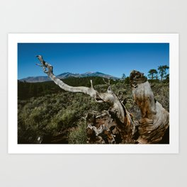 Twisted in Flagstaff Az Art Print