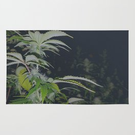 Organic Green Fields Forever 420 Edition Rug