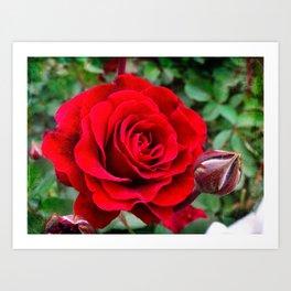 Rose revolution Art Print