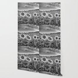Sunflowers At night. Bw Wallpaper