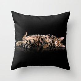 Bengal cat / Kitten on black Throw Pillow
