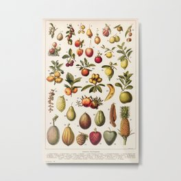 Adolphe Millot - Fruits exotiques - French vintage botanical illustration Metal Print