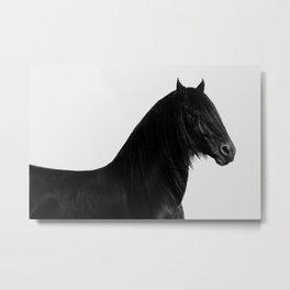 Black beauty Friesian stallion Metal Print