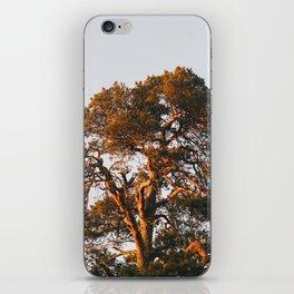 Half Tree iPhone Skin
