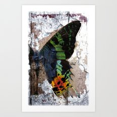 Sunset Moth Wing Abstract Art Print