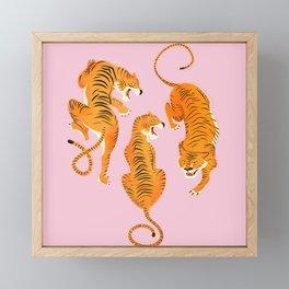 Three fierce tigers Framed Mini Art Print