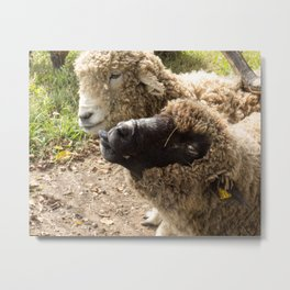 Two Sheep with Silly Faces Metal Print