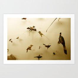 Birds of Glory Art Print