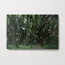 Hawaiian Forest Metal Print