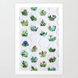 Hex Succulents Art Print