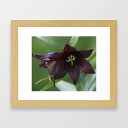 Chocolate Lily Photography Print Framed Art Print
