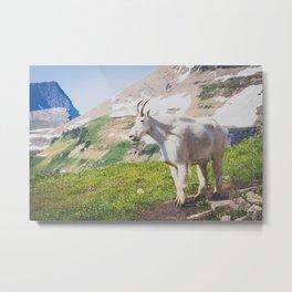Goat Series, III Metal Print