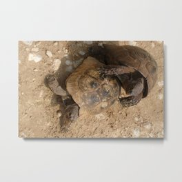 Slow Love - Tortoises Metal Print