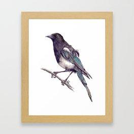 Juvenile Magpie Framed Art Print