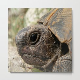 Close Up Side Portrait Of A Turkish Tortoise Metal Print