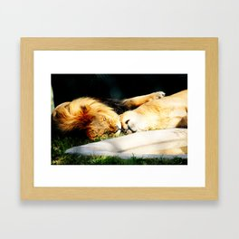 Cat Nap (Jungle Love) Framed Art Print