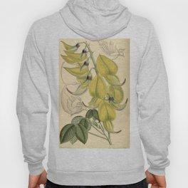 Crotalaria agatiflora 139 8505 Hoody