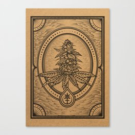 Cannabis Inflorescence Canvas Print