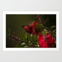 Autumn Buterfly Art Print