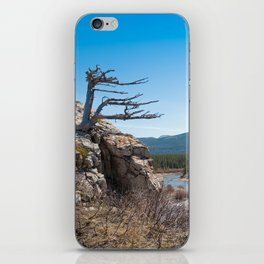 Windswept tree iPhone Skin