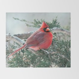 Red on Red (Northern Cardinal) Throw Blanket