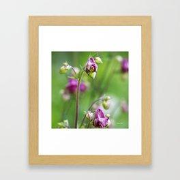Pink Wild Flowers Framed Art Print