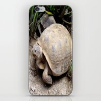 tortoise iPhone & iPod Skins featuring Tortoise by lennyfdzz