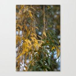 Autumn Willow Canvas Print