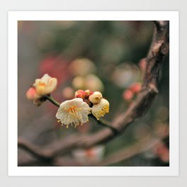 Cherry Blossom Blur Art Print