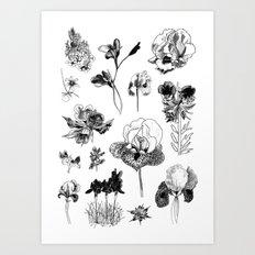 All the wild Art Print