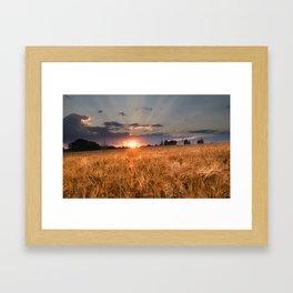 Sunset in grainfield Framed Art Print